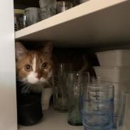 This shelf needed additional investigation