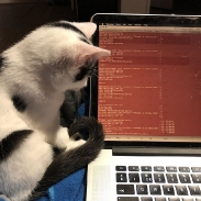 Kitten wants to know Latvian election results