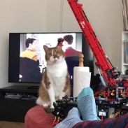 @guildensterh built a crane. And the cat did exactly what a cat would do